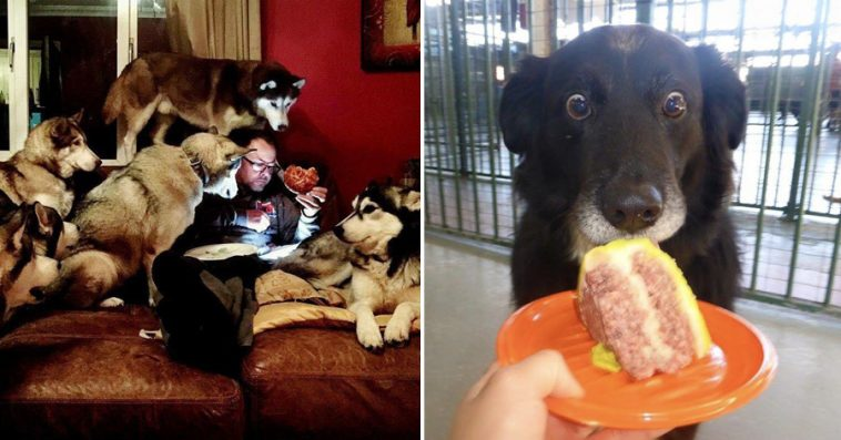 Hilarious Animals Whod Do Anything For Your Food - 15 hilarious animals whod do anything for your food