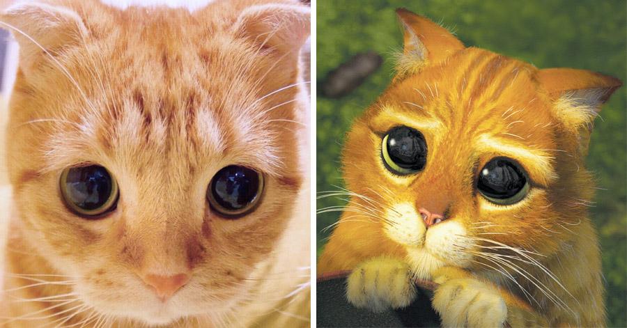 Old Cat Has Pus In Eyes