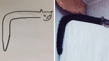 Hilarious Struggles Only Cat Owners Will Understand - 12 heartbreaking first world cat problems