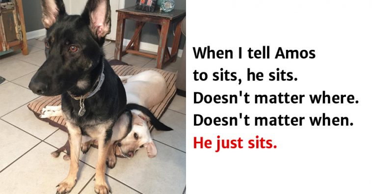 10 Hilarious Animal Memes That Will Make Your Day So Much