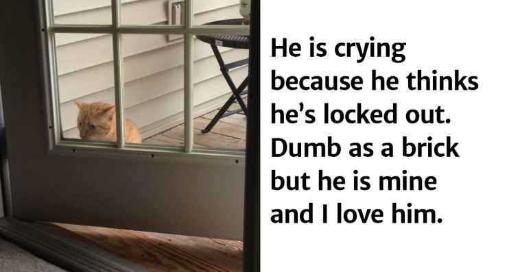 24+ Hilarious Cats That Are Not The Brightest Kids In Their Class