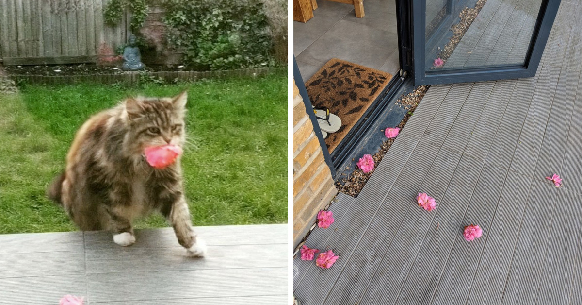 Cat Brings Flowers From Her Garden As A Gift To Neighbors Every Day Since Spring