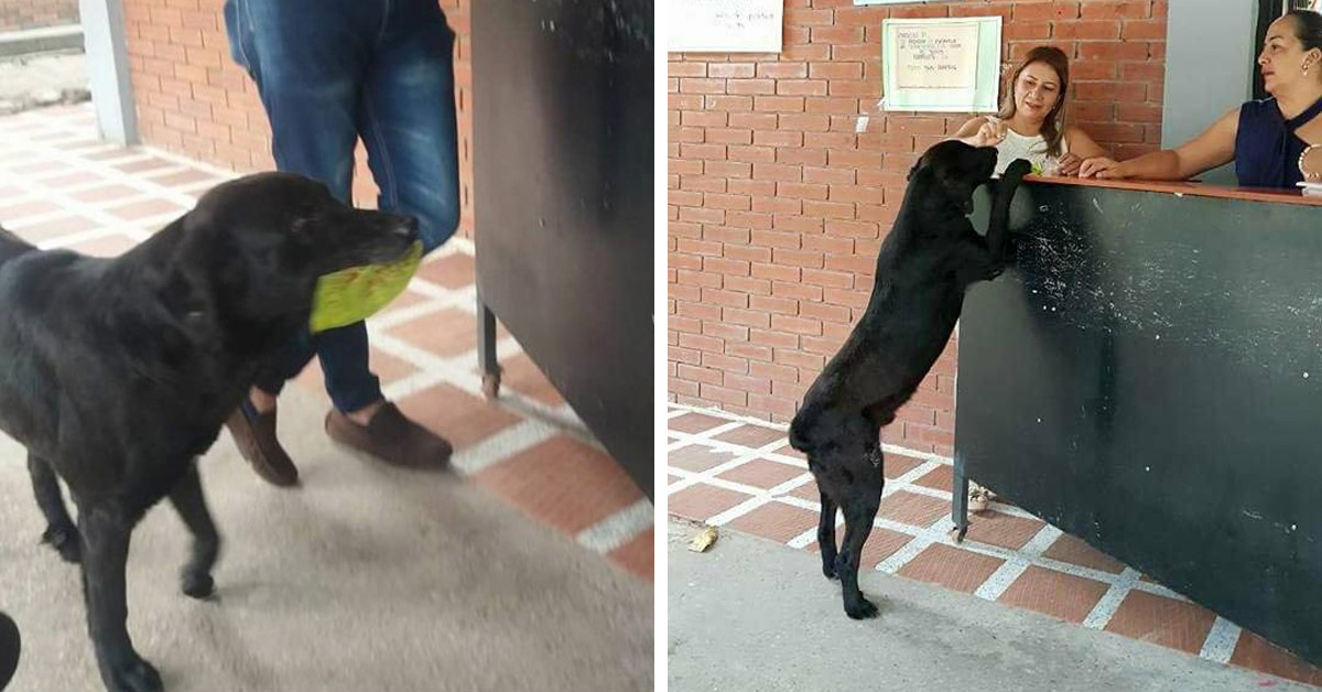 Clever Dog Observes How Students Buy Food And Tries To Use Leaves To 'Pay' For Cookies