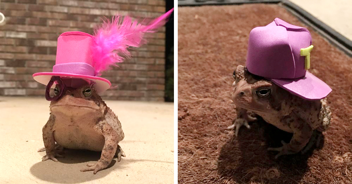 Man Creates Tiny Hats For The Toad Who Shows Up On His Porch Every Day
