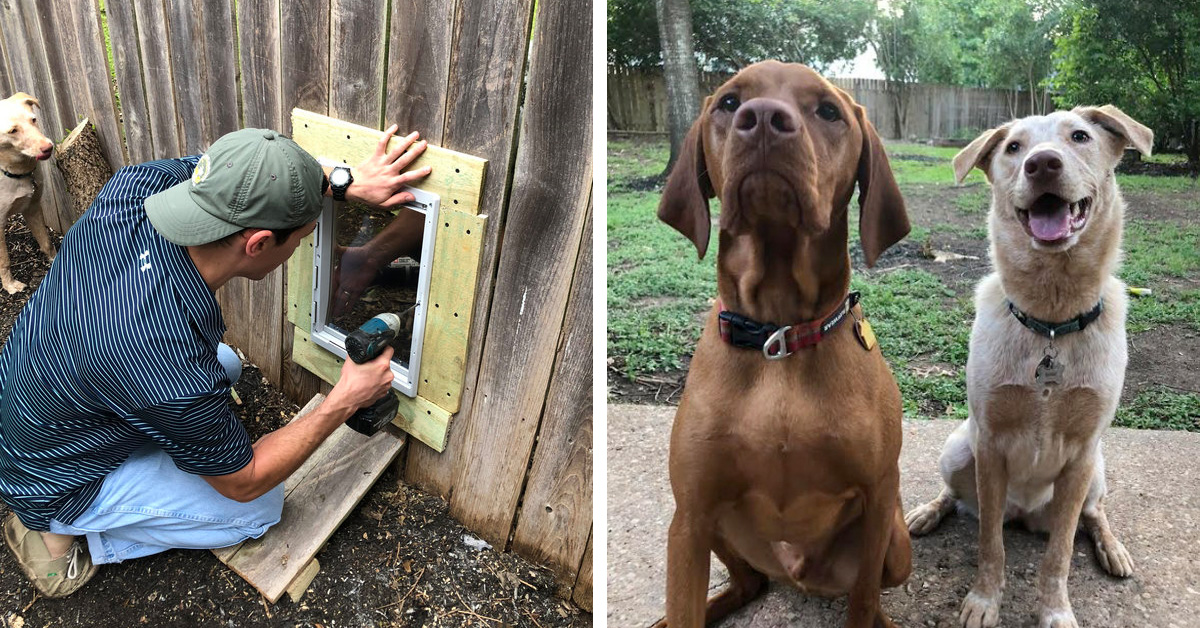 Neighbors Build Doggy Door In Fence So Their Dogs Can Hang Out Whenever They Want