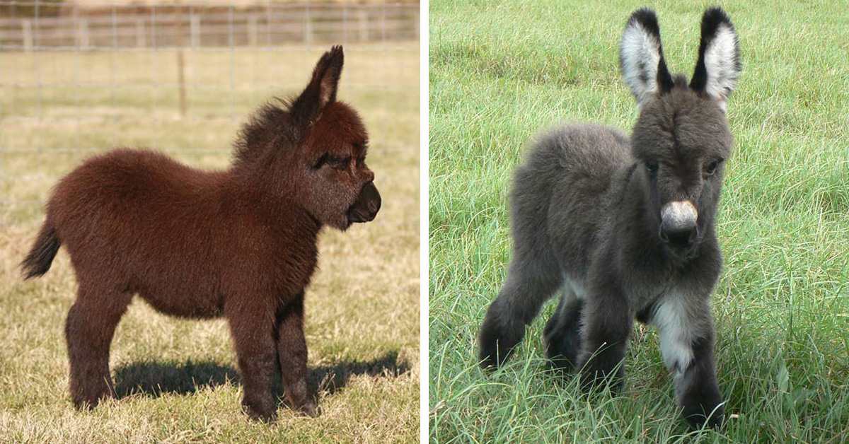 22 Photos Proving That Baby Donkeys Are The Cutest Animals Of The Animal Kingdom