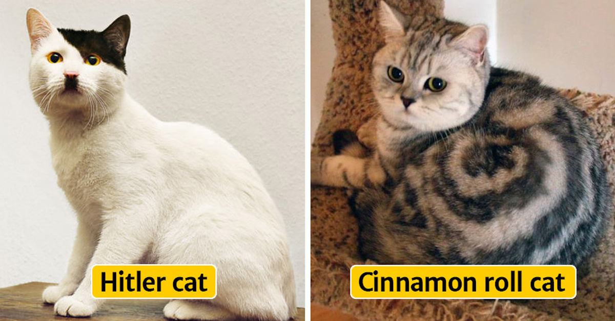 30 Cats With The Most Unique Fur Markings