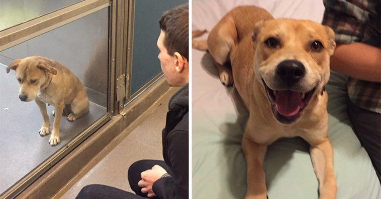 35 Photos Of Dogs Before And After Adoption