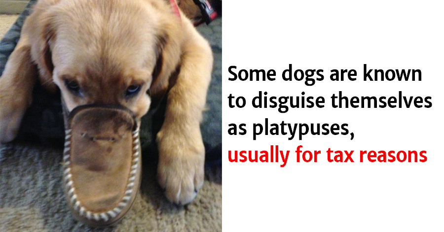 Hilarious Dog Facts You Certainly Didn't Know