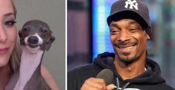 Dog looking like Snoop Dogg