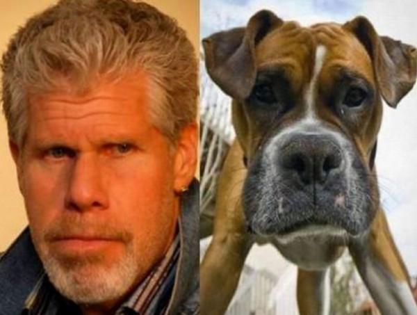 Dog looking like Ron Perlman