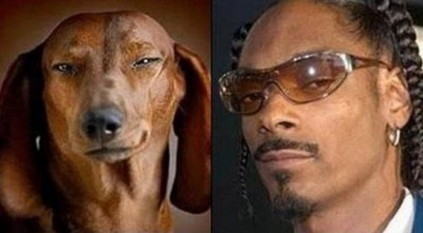 Dog looking like Snoop Dogg