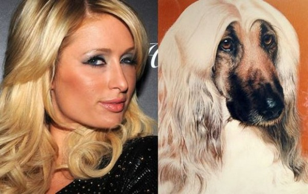 Dog looking like Paris Hilton