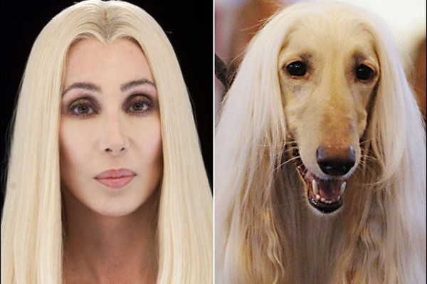 Dog looking like Cher