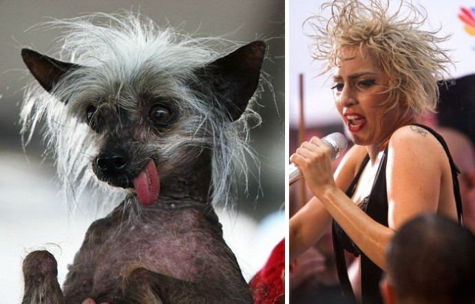 Dog looking like Lady Gaga