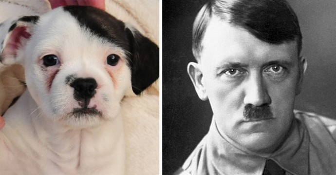 Dog looking like Hitler