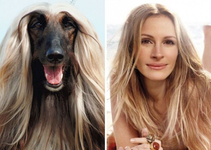 Dog looking like Julia Roberts