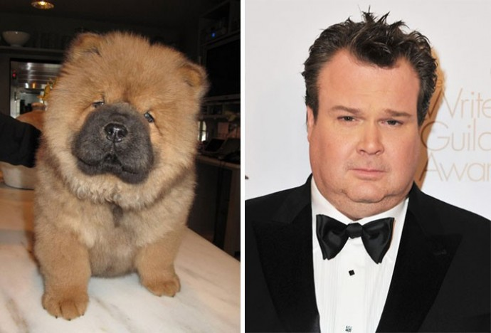Dog looking like Eric Stonestreet