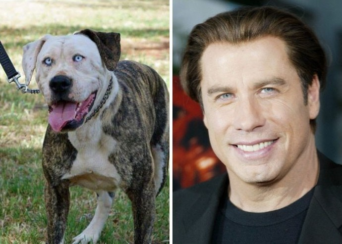 Dog looking like John Travolta