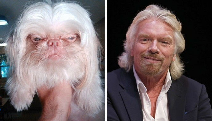 Dog looking like Richard Branson