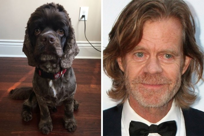 Dog looking like William Macy