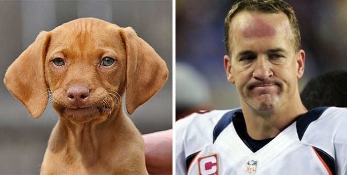 Dog looking like Payton Manning