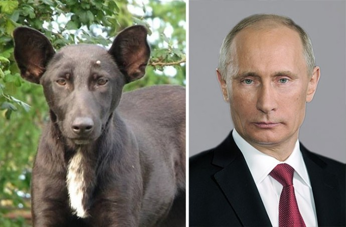 Dog looking like Putin