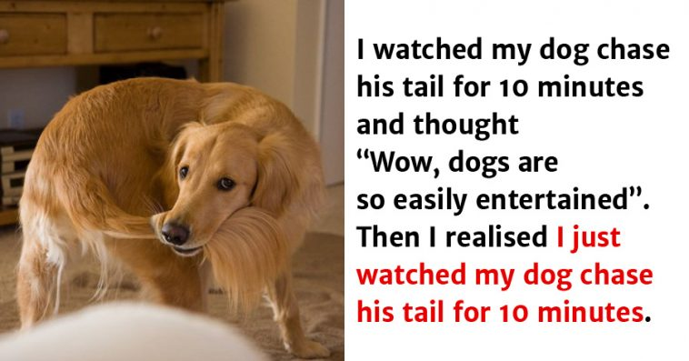 Image result for hilarious dog pics