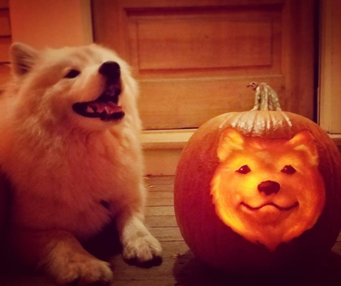 Dog themed pumpkin carvings that will get you into the