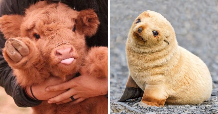 22 Baby Animals That Are Too Cute To Be True