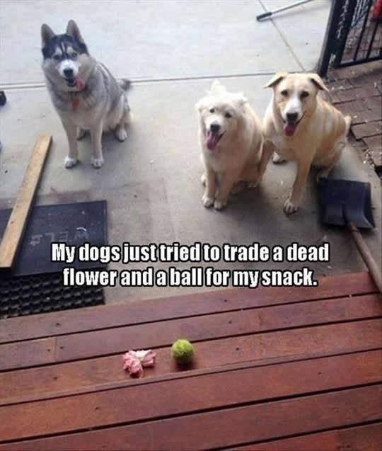 Weird Animals Memes 6