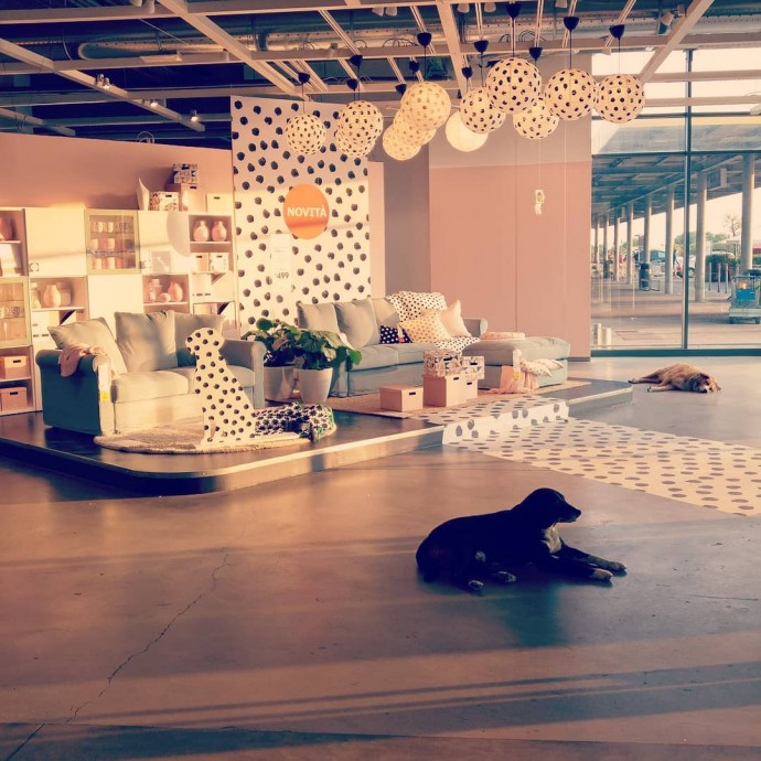 IKEA Store In Italy Opens Its Doors To Homeless Dogs To