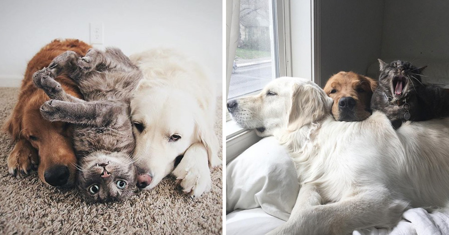 This Cat Is The Third Wheel In A Dog's Relationship, And Their Photos Are Just Too Funny
