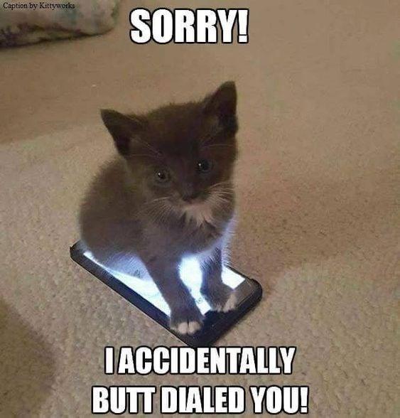 20-adorable-kitten-memes-that-will-make-