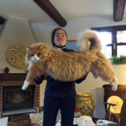 20 Amazing Pictures With Large Maine Coon Cats