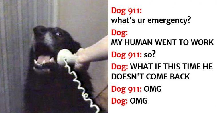 dog calling 911