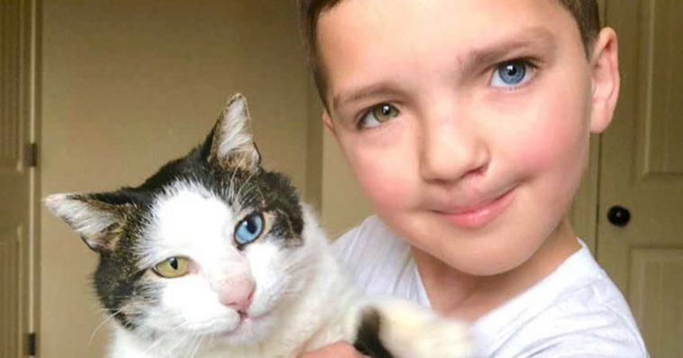 7-year-old boy who was embarrassed by his appearance receives from a shelter a cat that is just as unique
