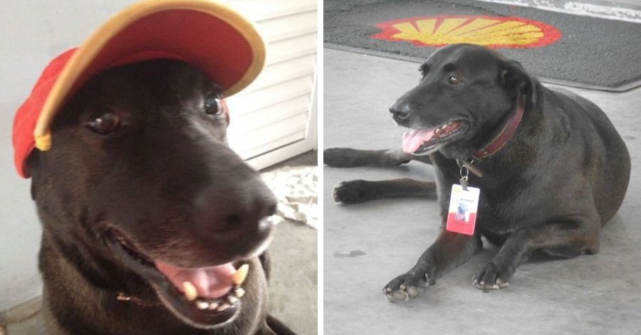Dog Abandoned At Gas Staton Becomes An Adorable Full-Time Employee