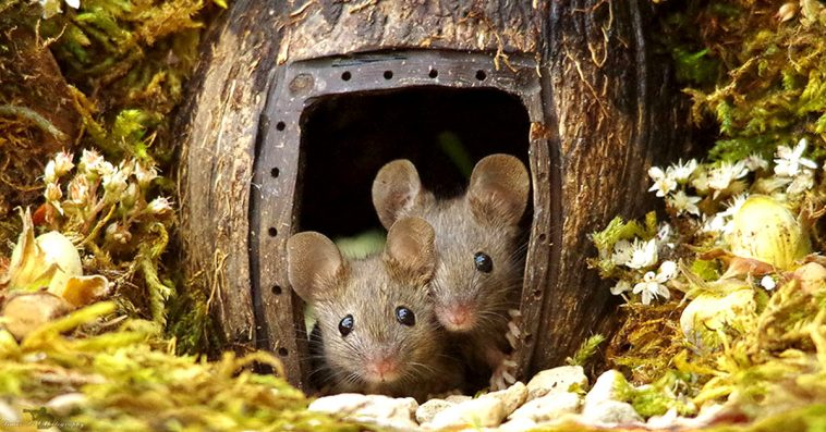 Man Finds A Family Of Mice In His Garden, Builds Them A Tiny Village To Live In