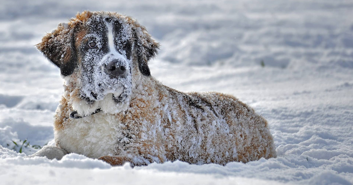 New Law Makes It A Felony To Leave Your Dog Out In The Cold