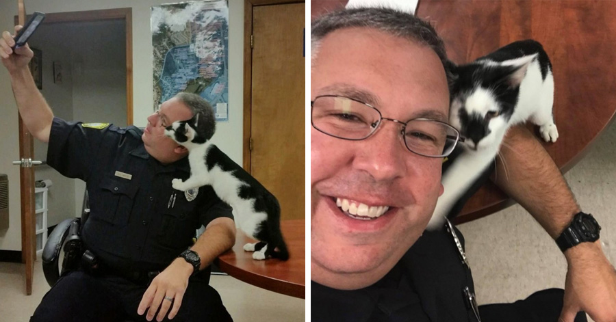Stray Cat Sneaks Into Police Station And Chooses Officer As His New Family