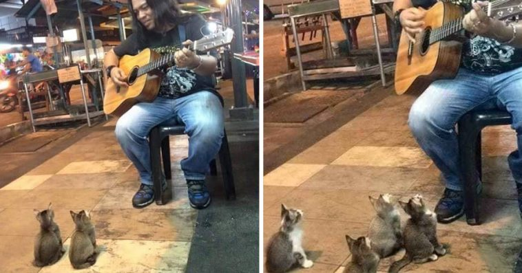 Street Singer Was Ignored By Everyone, Then 4 Kittens Came To Show Their Support