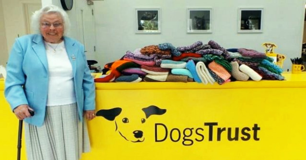 89-Year-Old Woman Knitted Over 450 Coats For Shelter Dogs To Keep Them Warm During Winter