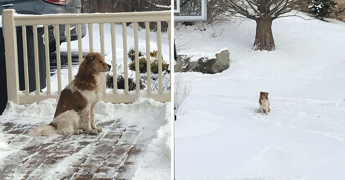 Abandoned Dog Waits 5 Days In The Snow For Her Family To Come Back
