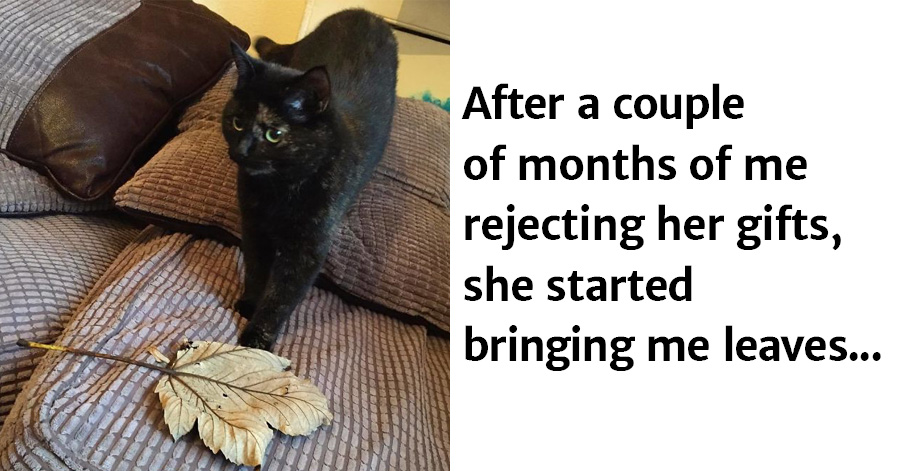 Cat Figures Out Owner Doesn't Appreciate Dead Mice And Birds As Gifts, Finally Starts Bringing Giant Leaves Instead