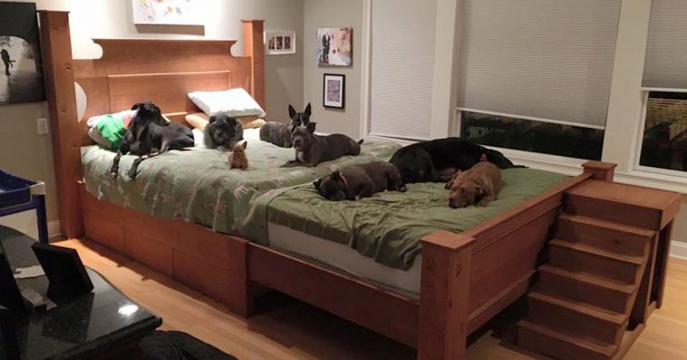 Dog Futon Bed