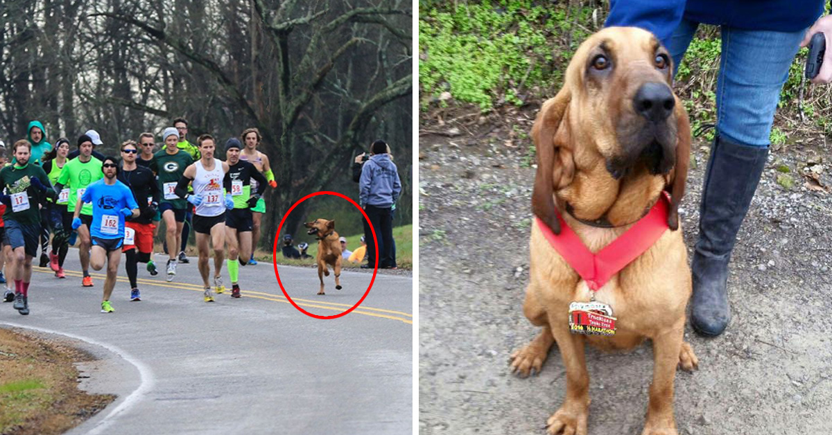 Dog Let Out To Pee Accidentally Takes Part To Half Marathon, Finishes 7th