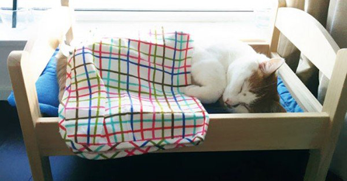IKEA Donated Doll Beds To A Cat Shelter, And Cats Finally Have A Comfortable Place To Sleep