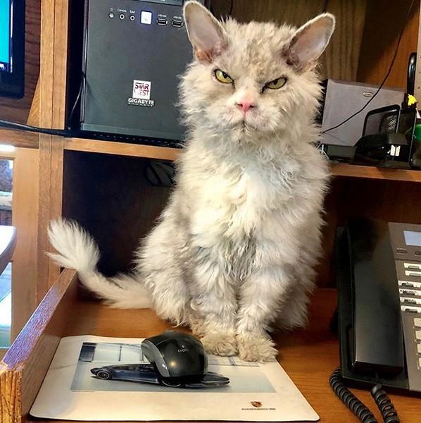 Meet Pompous Albert The Office Cat Who Looks Always