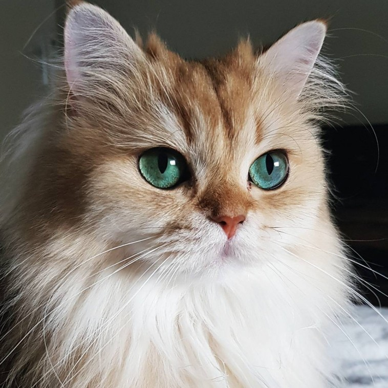 Meet Smoothie The Most Photogenic Cat In The World Who S